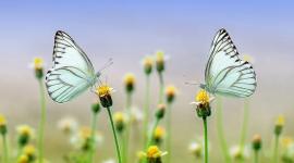 Bild Schmetterlinge